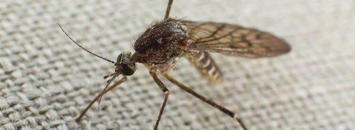 Co pomoże odstraszyć komary?